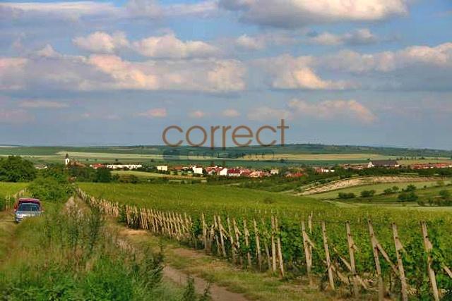 Prodej vinařství s vinicemi, penzionem a vinným sklepem, Velké Pavlovice