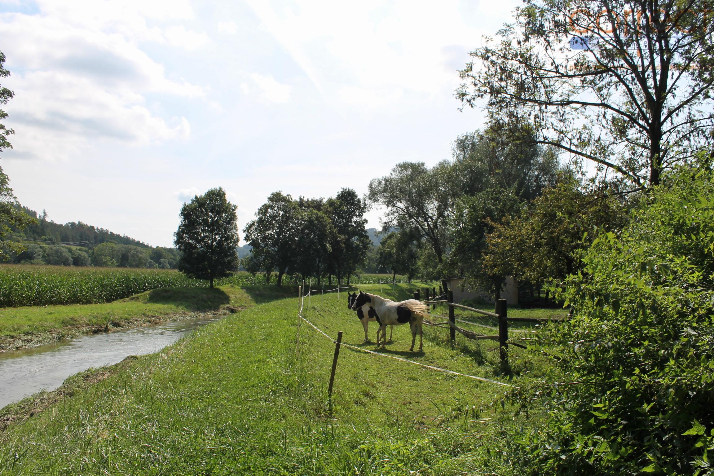 Prodej mlýna s pozemky, Vranová Lhota, c.p.: 6326m2